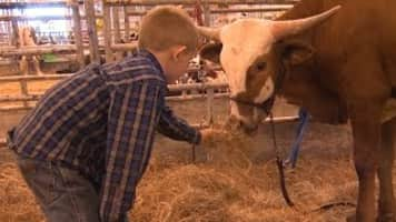 Houston Livestock Show and Rodeo -